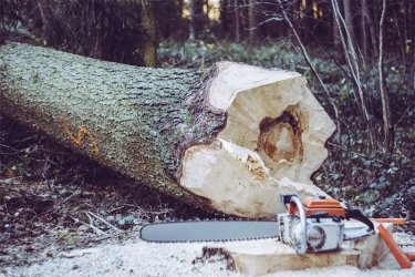 Best Chainsaw Chap Reviews and Buying Guide