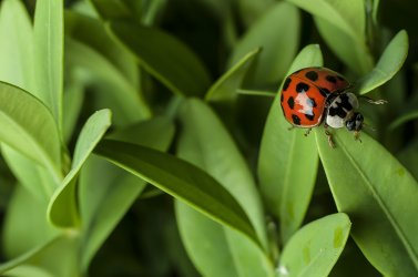 10 Powerful Insects You Want in Your Garden